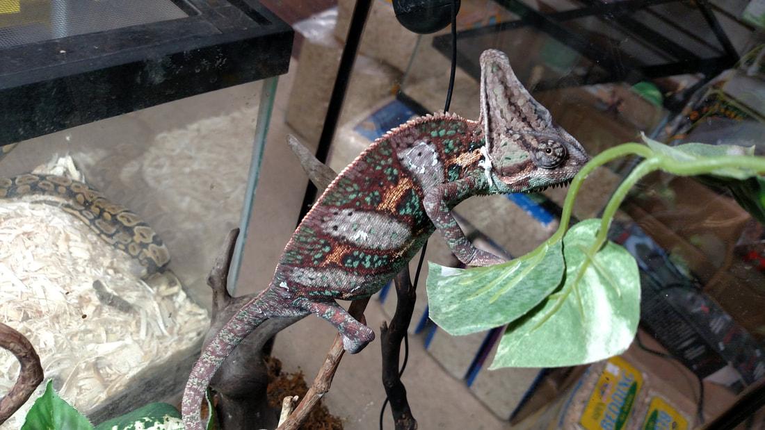 Reptiles - ANIMAL ATLANTA